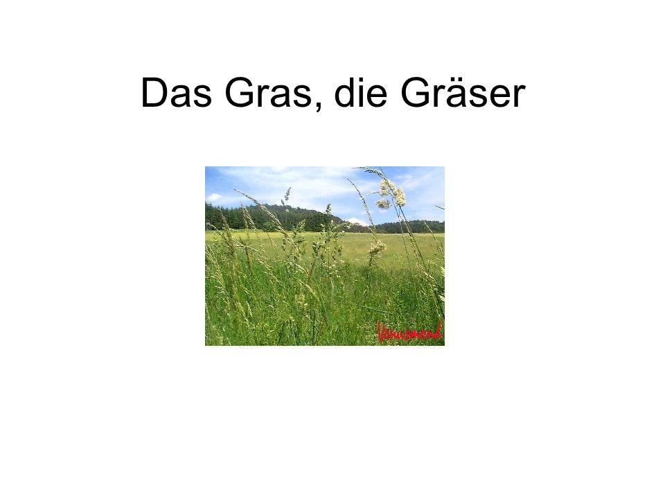 Das Gras, die Gräser