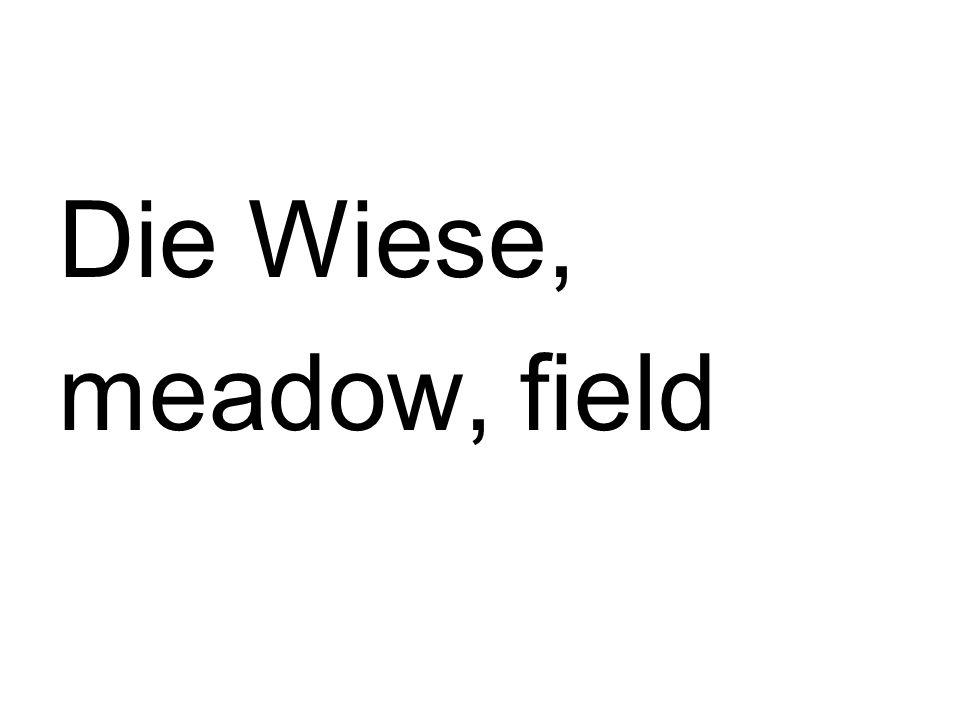 Die Wiese, meadow, field