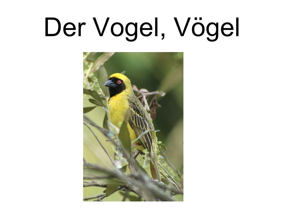 Der Vogel, Vögel