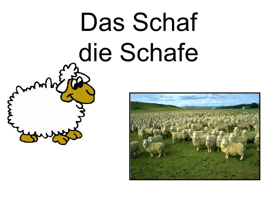 Das Schaf die Schafe