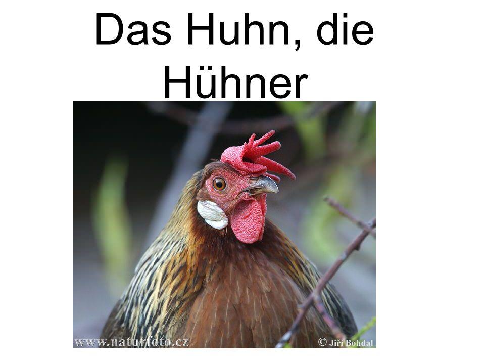 Das Huhn, die Hühner