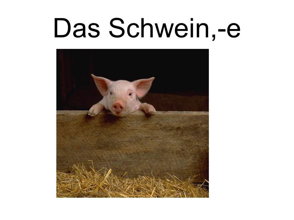 Das Schwein,-e