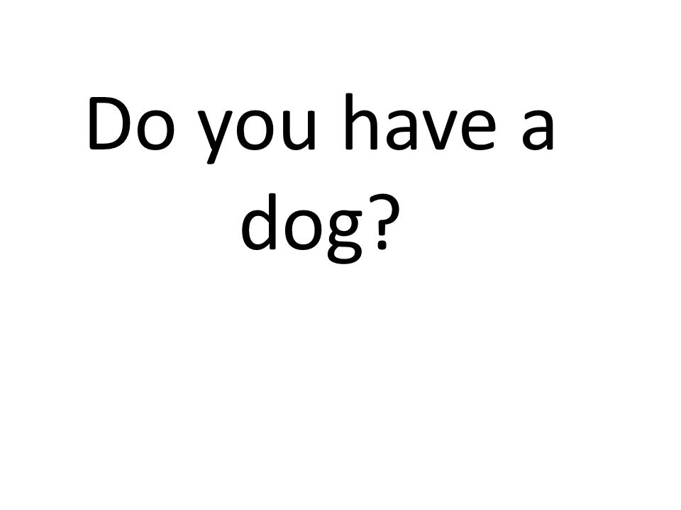 Do you have a dog