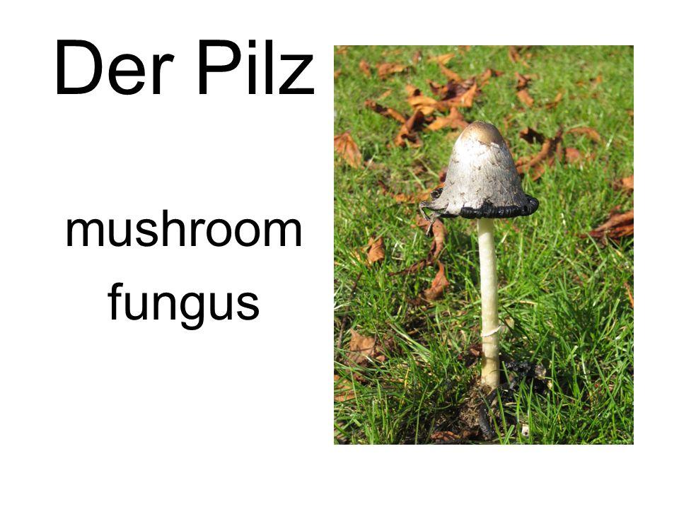 Der Pilz mushroom fungus