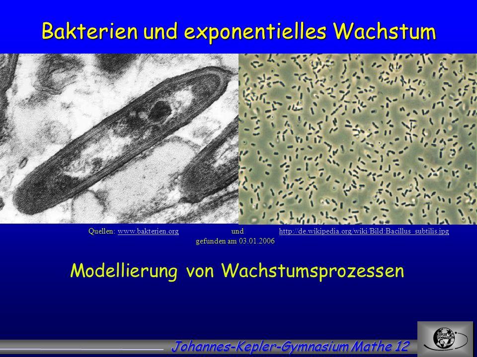 Bakterien und exponentielles Wachstum Quellen: www.bakterien.orgund http://de.wikipedia.org/wiki/Bild:Bacillus_subtilis.jpgwww.bakterien.orghttp://de.