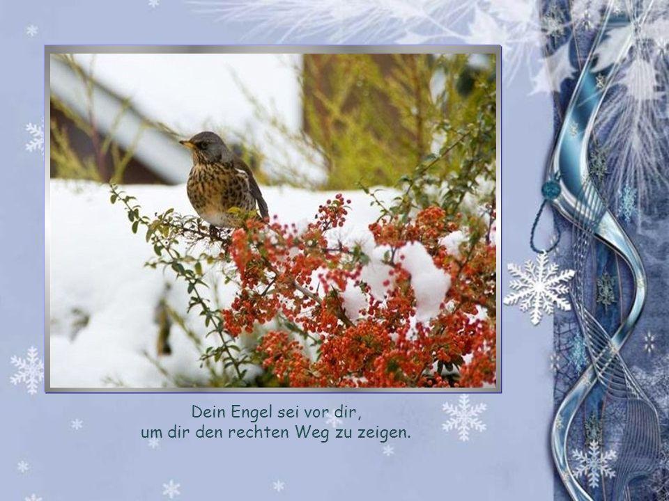 Möge ein Engel schützend an deiner Seite gehen und dein Herz mit Liebe und Freude füllen und mögen die Strahlen der Sonne warm dein Gesicht bescheinen und deine Seele wärmen.
