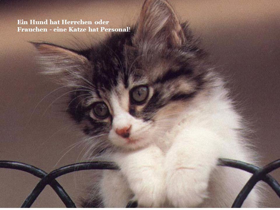 Ein Hund hat Herrchen oder Frauchen - eine Katze hat Personal!