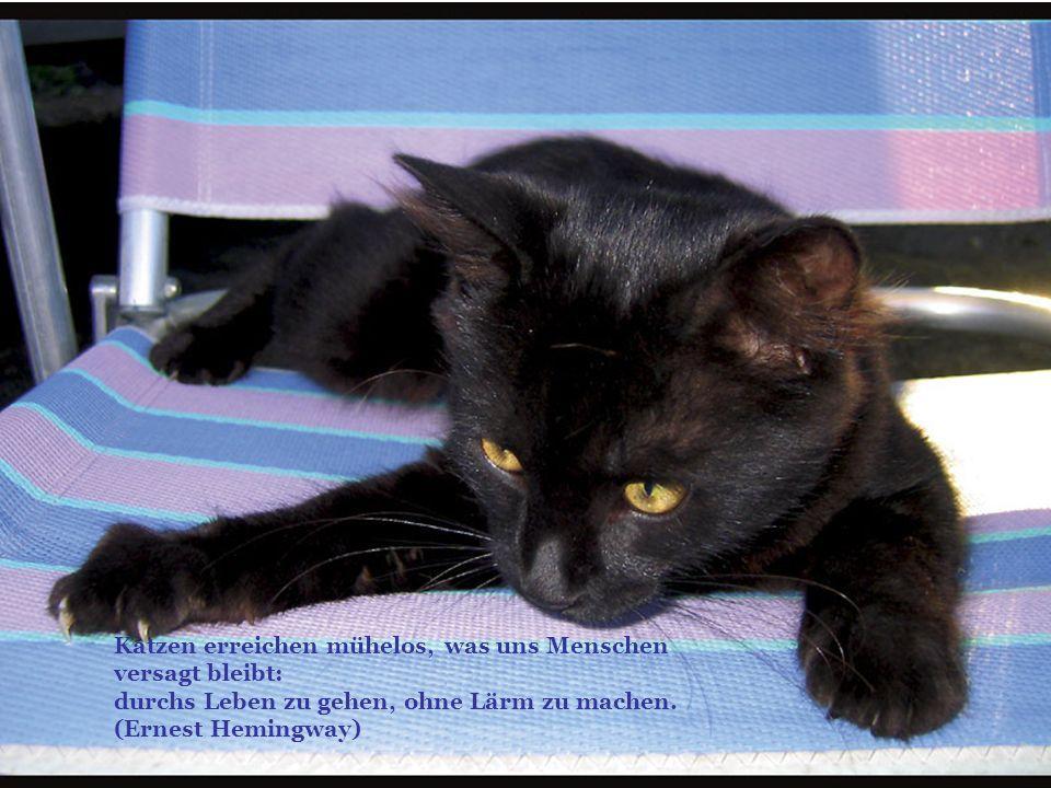 Katzen erreichen mühelos, was uns Menschen versagt bleibt: durchs Leben zu gehen, ohne Lärm zu machen. (Ernest Hemingway)