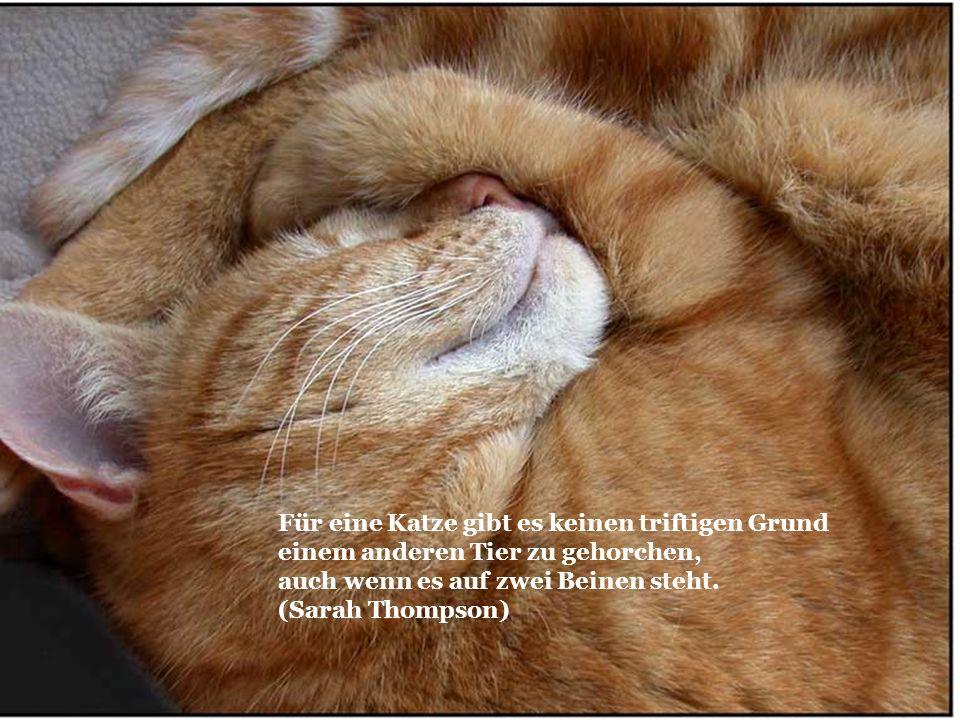 Für eine Katze gibt es keinen triftigen Grund einem anderen Tier zu gehorchen, auch wenn es auf zwei Beinen steht. (Sarah Thompson)