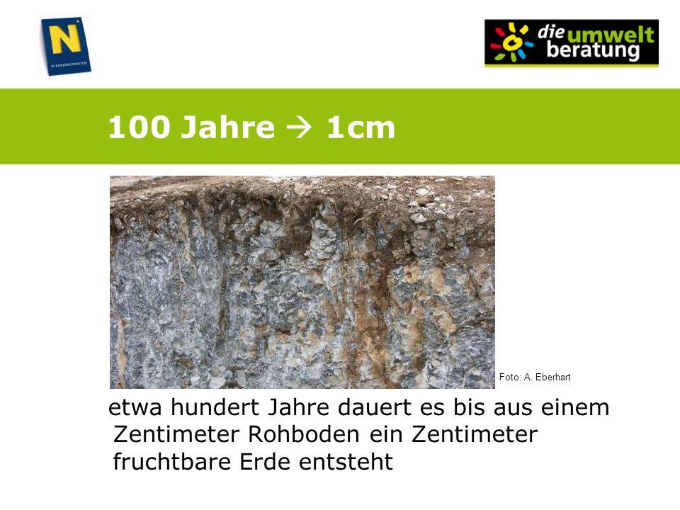 100 Jahre 1cm etwa hundert Jahre dauert es bis aus einem Zentimeter Rohboden ein Zentimeter fruchtbare Erde entsteht Foto: A. Eberhart