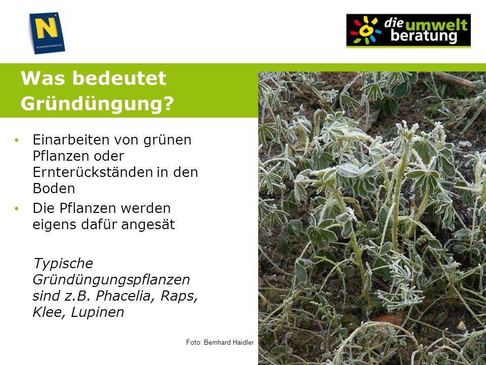 Was bedeutet Gründüngung? Einarbeiten von grünen Pflanzen oder Ernterückständen in den Boden Die Pflanzen werden eigens dafür angesät Typische Gründün