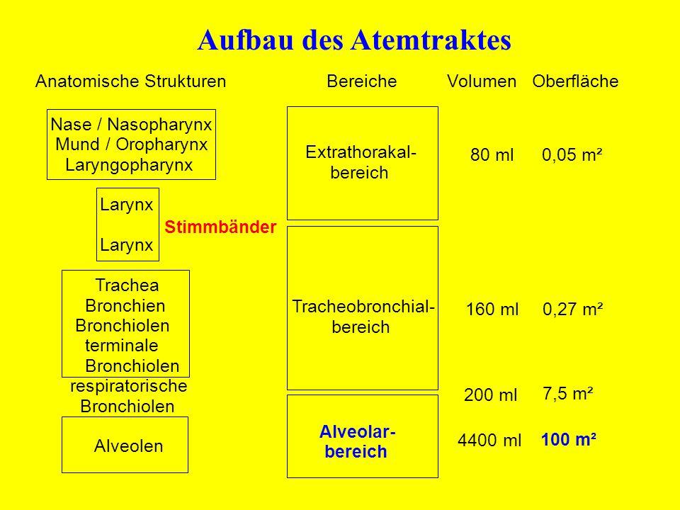 Aufbau des Atemtraktes Anatomische Strukturen Bereiche Volumen Oberfläche Nase / Nasopharynx Mund / Oropharynx Laryngopharynx Larynx Stimmbänder Laryn