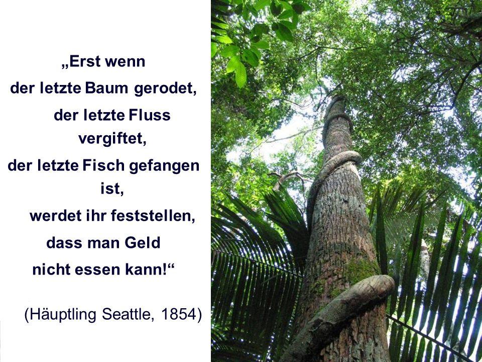 Lehrgang Kommunale/r Klimaschutzexperte/-in Erst wenn der letzte Baum gerodet, der letzte Fluss vergiftet, der letzte Fisch gefangen ist, werdet ihr feststellen, dass man Geld nicht essen kann.