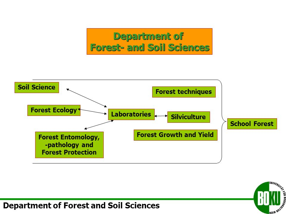 Department of Forest- and Soil Sciences Forest Entomology, -pathology and Forest Protection Silviculture Forest Growth and Yield Forest techniques Soil Science Forest Ecology School Forest Laboratories Department of Forest and Soil Sciences
