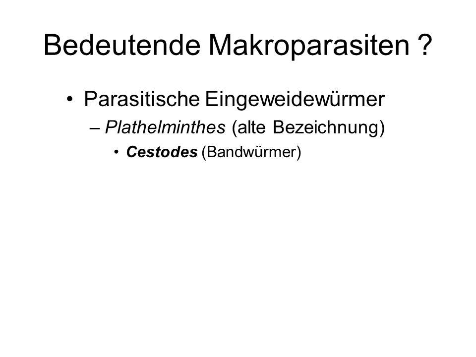 Bedeutende Makroparasiten ? Parasitische Eingeweidewürmer –Plathelminthes (alte Bezeichnung) Cestodes (Bandwürmer)