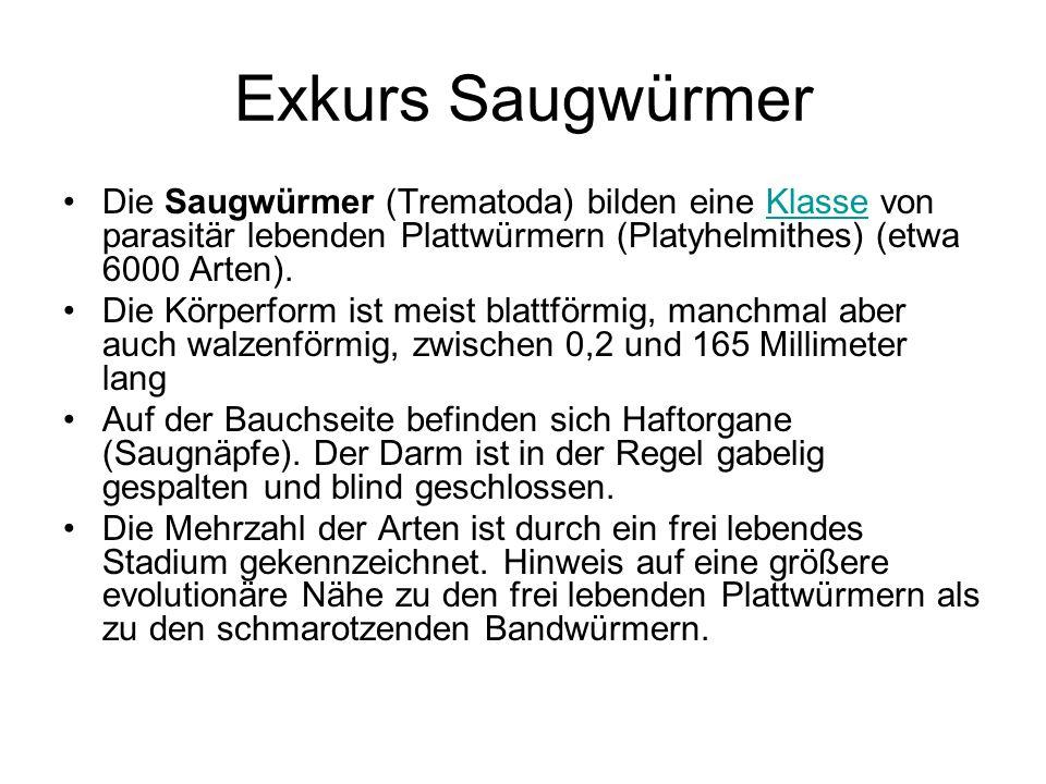 Exkurs Saugwürmer Die Saugwürmer (Trematoda) bilden eine Klasse von parasitär lebenden Plattwürmern (Platyhelmithes) (etwa 6000 Arten).Klasse Die Körp