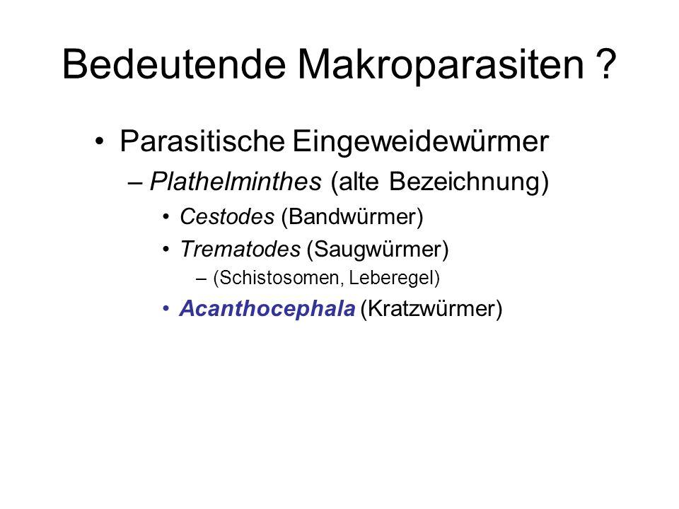 Bedeutende Makroparasiten ? Parasitische Eingeweidewürmer –Plathelminthes (alte Bezeichnung) Cestodes (Bandwürmer) Trematodes (Saugwürmer) –(Schistoso