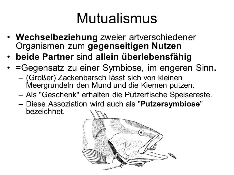 Mutualismus Wechselbeziehung zweier artverschiedener Organismen zum gegenseitigen Nutzen beide Partner sind allein überlebensfähig =Gegensatz zu einer