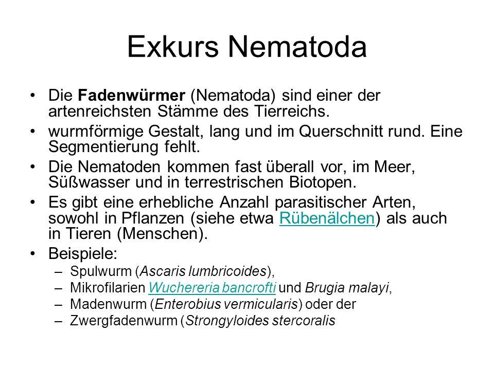 Exkurs Nematoda Die Fadenwürmer (Nematoda) sind einer der artenreichsten Stämme des Tierreichs. wurmförmige Gestalt, lang und im Querschnitt rund. Ein