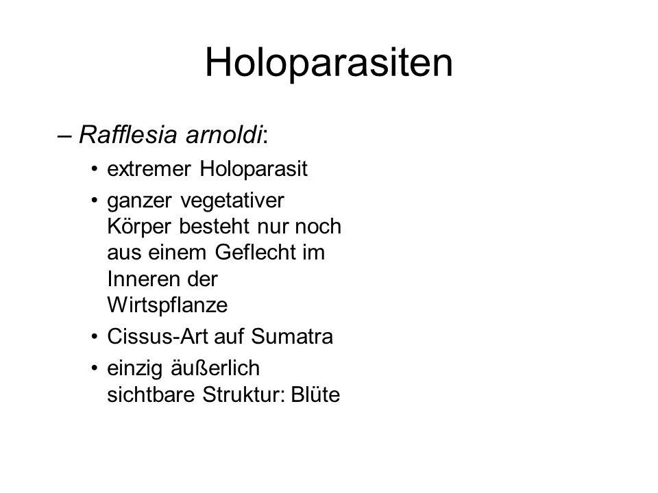 Holoparasiten –Rafflesia arnoldi: extremer Holoparasit ganzer vegetativer Körper besteht nur noch aus einem Geflecht im Inneren der Wirtspflanze Cissu