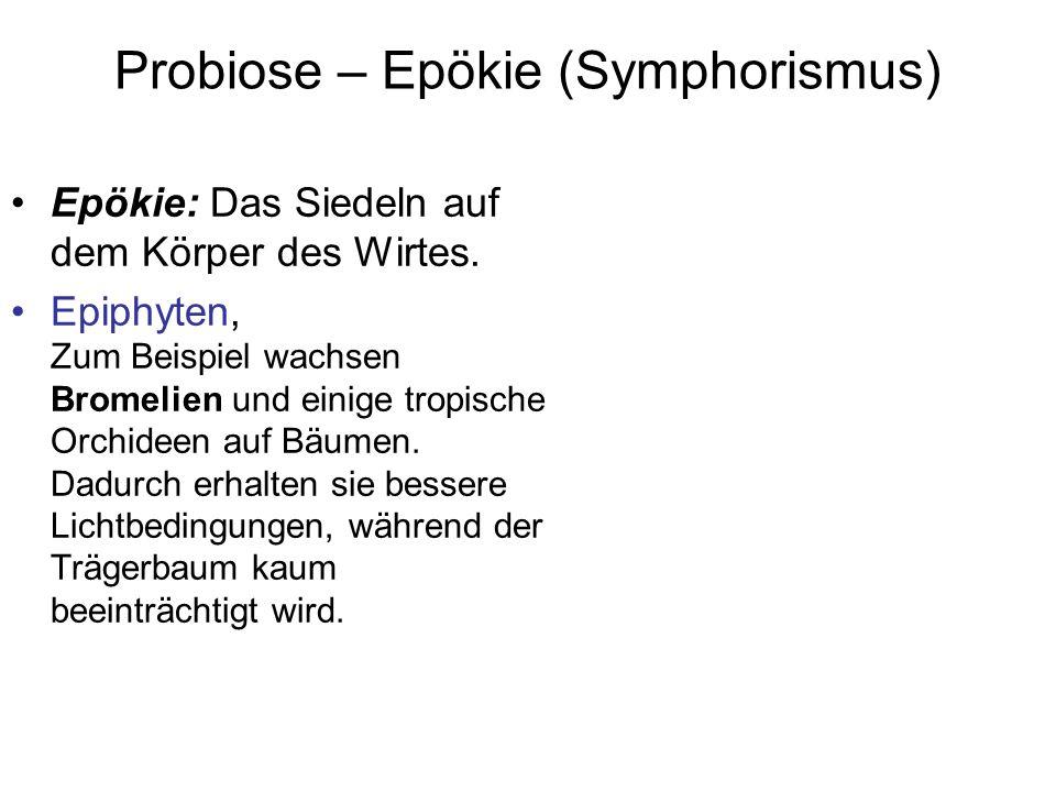 Probiose – Epökie (Symphorismus) Epökie: Das Siedeln auf dem Körper des Wirtes. Epiphyten, Zum Beispiel wachsen Bromelien und einige tropische Orchide