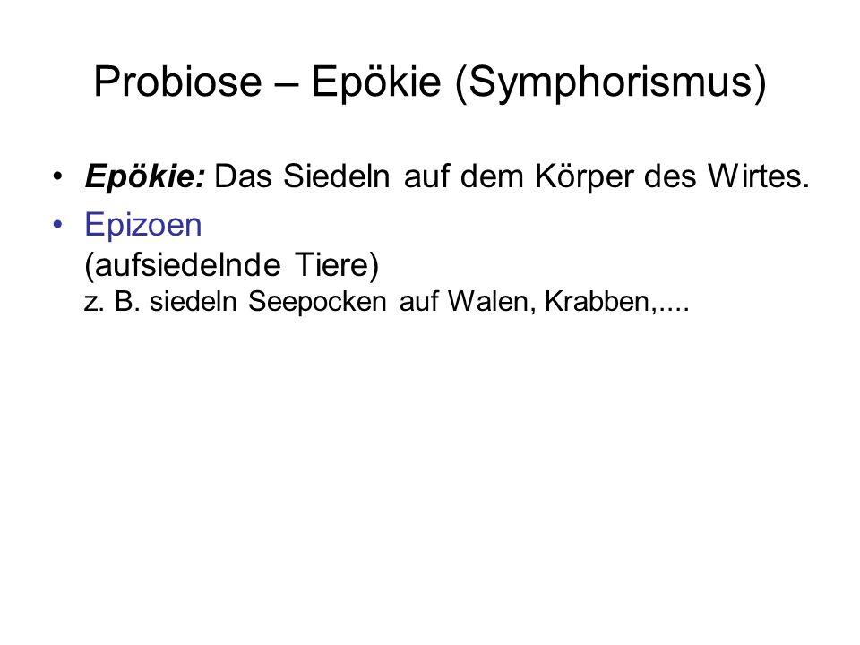 Probiose – Epökie (Symphorismus) Epökie: Das Siedeln auf dem Körper des Wirtes. Epizoen (aufsiedelnde Tiere) z. B. siedeln Seepocken auf Walen, Krabbe