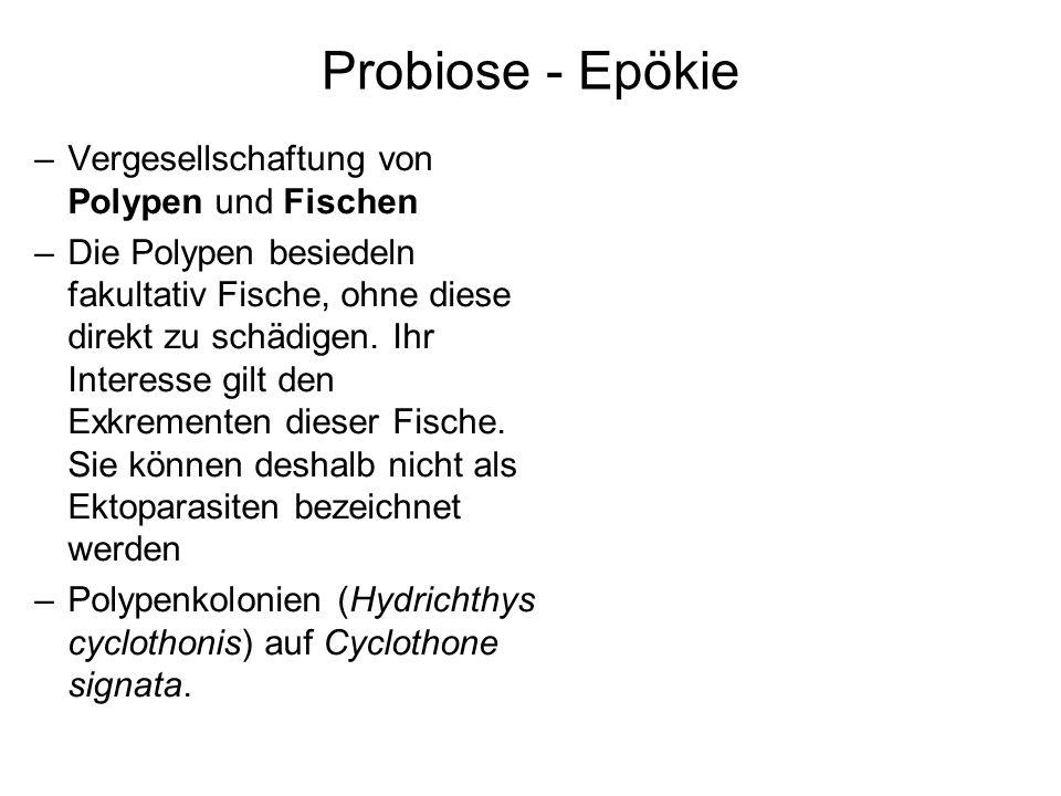 Probiose - Epökie –Vergesellschaftung von Polypen und Fischen –Die Polypen besiedeln fakultativ Fische, ohne diese direkt zu schädigen. Ihr Interesse