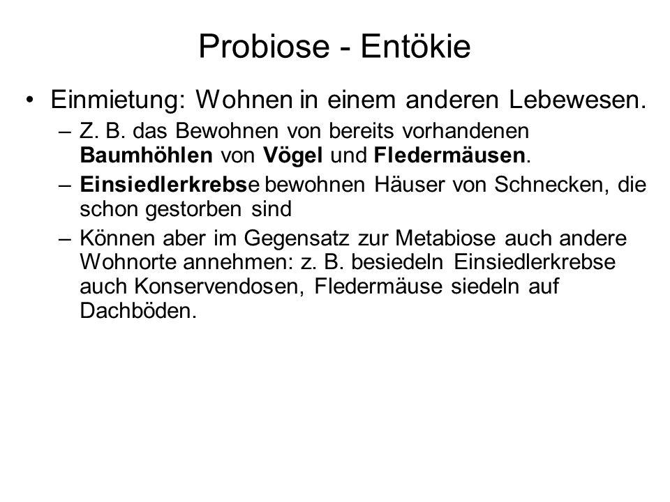 Probiose - Entökie Einmietung: Wohnen in einem anderen Lebewesen. –Z. B. das Bewohnen von bereits vorhandenen Baumhöhlen von Vögel und Fledermäusen. –