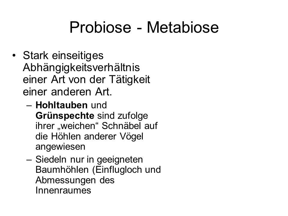 Probiose - Metabiose Stark einseitiges Abhängigkeitsverhältnis einer Art von der Tätigkeit einer anderen Art. –Hohltauben und Grünspechte sind zufolge