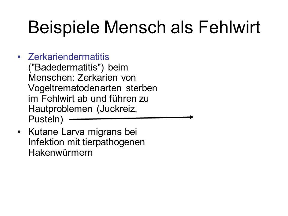 Beispiele Mensch als Fehlwirt Zerkariendermatitis (
