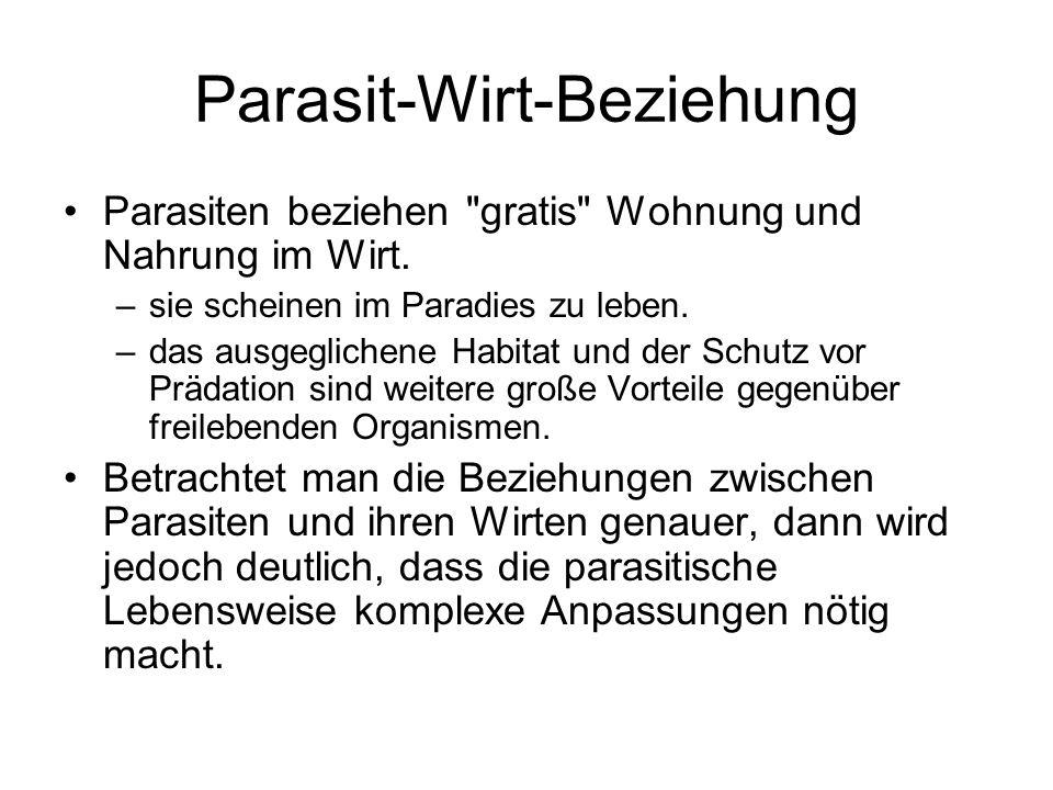 Parasit-Wirt-Beziehung Parasiten beziehen