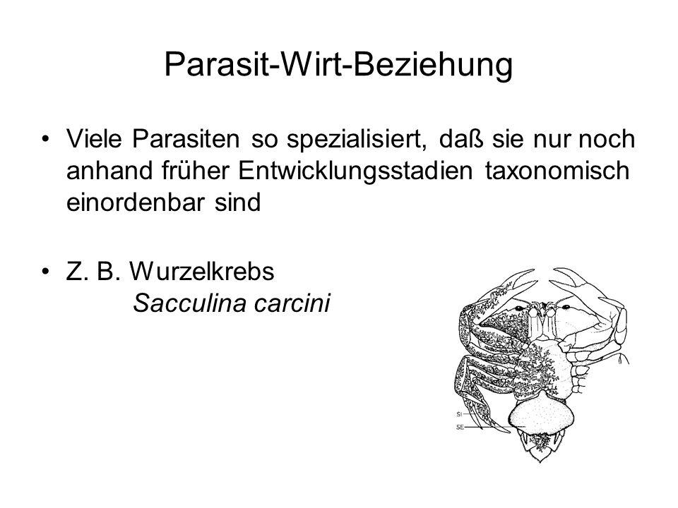 Parasit-Wirt-Beziehung Viele Parasiten so spezialisiert, daß sie nur noch anhand früher Entwicklungsstadien taxonomisch einordenbar sind Z. B. Wurzelk