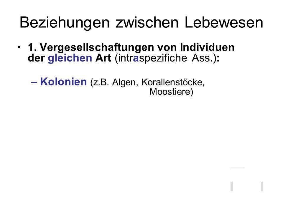 Beziehungen zwischen Lebewesen 1. Vergesellschaftungen von Individuen der gleichen Art (intraspezifiche Ass.): –Kolonien (z.B. Algen, Korallenstöcke,