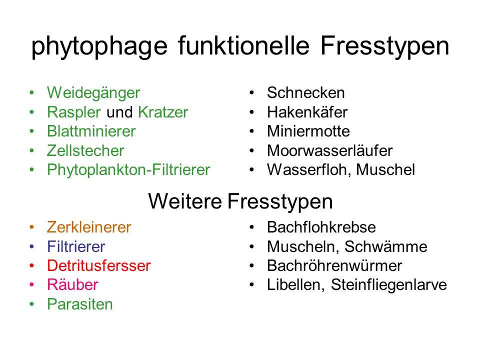 phytophage funktionelle Fresstypen Weidegänger Raspler und Kratzer Blattminierer Zellstecher Phytoplankton-Filtrierer Zerkleinerer Filtrierer Detritus