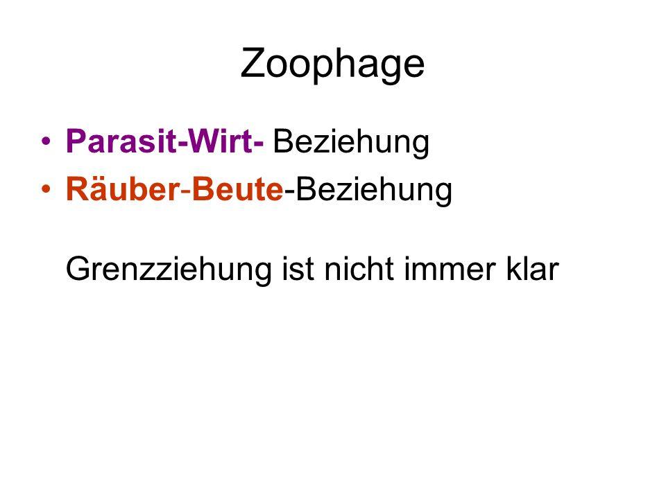 Zoophage Parasit-Wirt- Beziehung Räuber-Beute-Beziehung Grenzziehung ist nicht immer klar