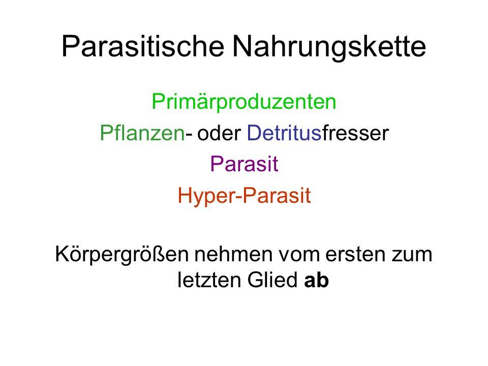 Parasitische Nahrungskette Primärproduzenten Pflanzen- oder Detritusfresser Parasit Hyper-Parasit Körpergrößen nehmen vom ersten zum letzten Glied ab