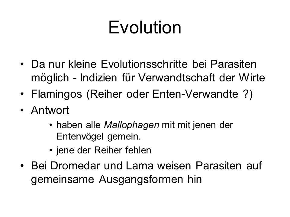 Evolution Da nur kleine Evolutionsschritte bei Parasiten möglich - Indizien für Verwandtschaft der Wirte Flamingos (Reiher oder Enten-Verwandte ?) Ant