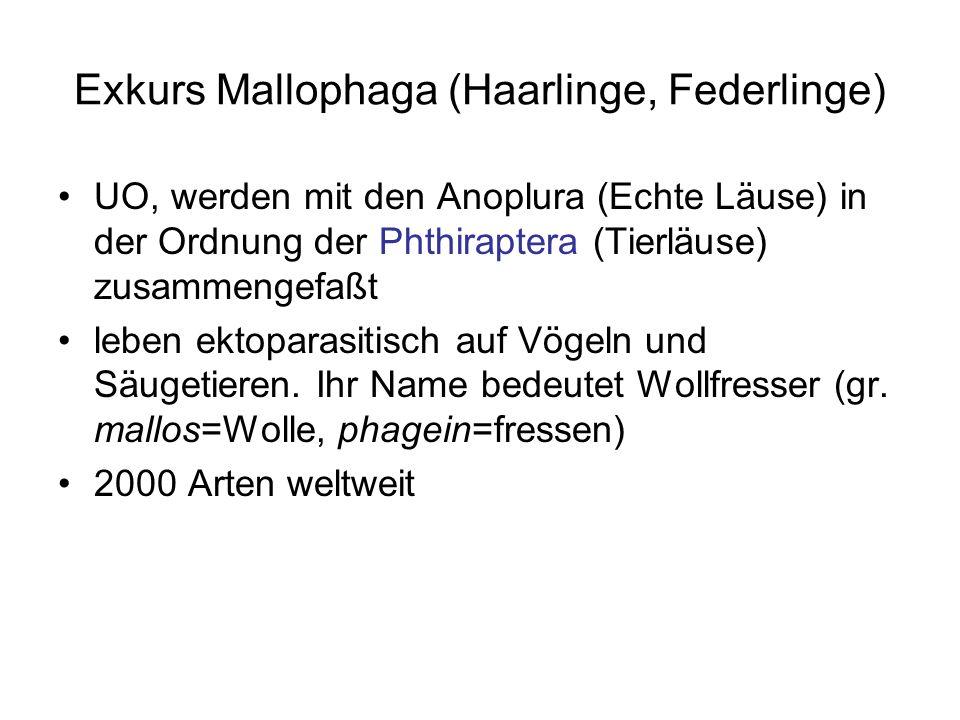 Exkurs Mallophaga (Haarlinge, Federlinge) UO, werden mit den Anoplura (Echte Läuse) in der Ordnung der Phthiraptera (Tierläuse) zusammengefaßt leben e
