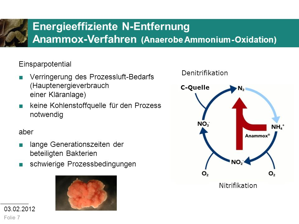 03.02.2012 Folie 7 Nitrifikation Denitrifikation Energieeffiziente N-Entfernung Anammox-Verfahren (Anaerobe Ammonium - Oxidation) Einsparpotential Ver