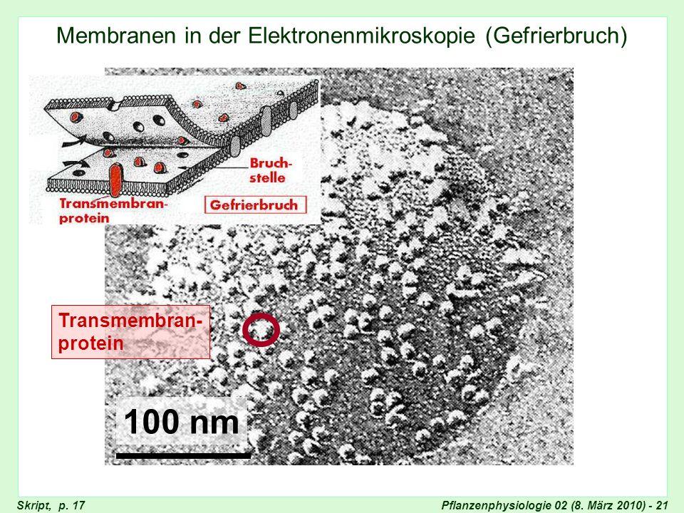 Pflanzenphysiologie 02 (8. März 2010) - 21 Membranen in der Elektronenmikroskopie (Gefrierbruch) Membranmodell, Singer und Nicolson Transmembran- prot