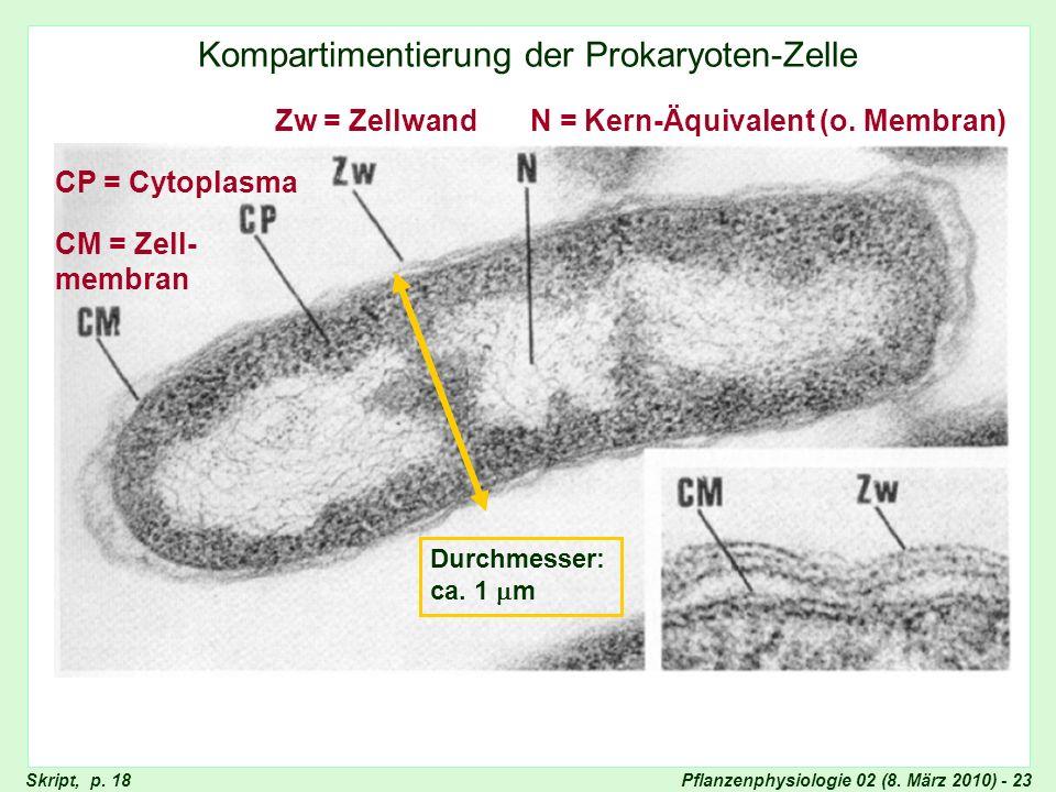 Pflanzenphysiologie 02 (8. März 2010) - 23 Kompartimentierung der Prokaryoten-Zelle Unkompartimentierte Bakterienzelle Zw = Zellwand CM = Zell- membra
