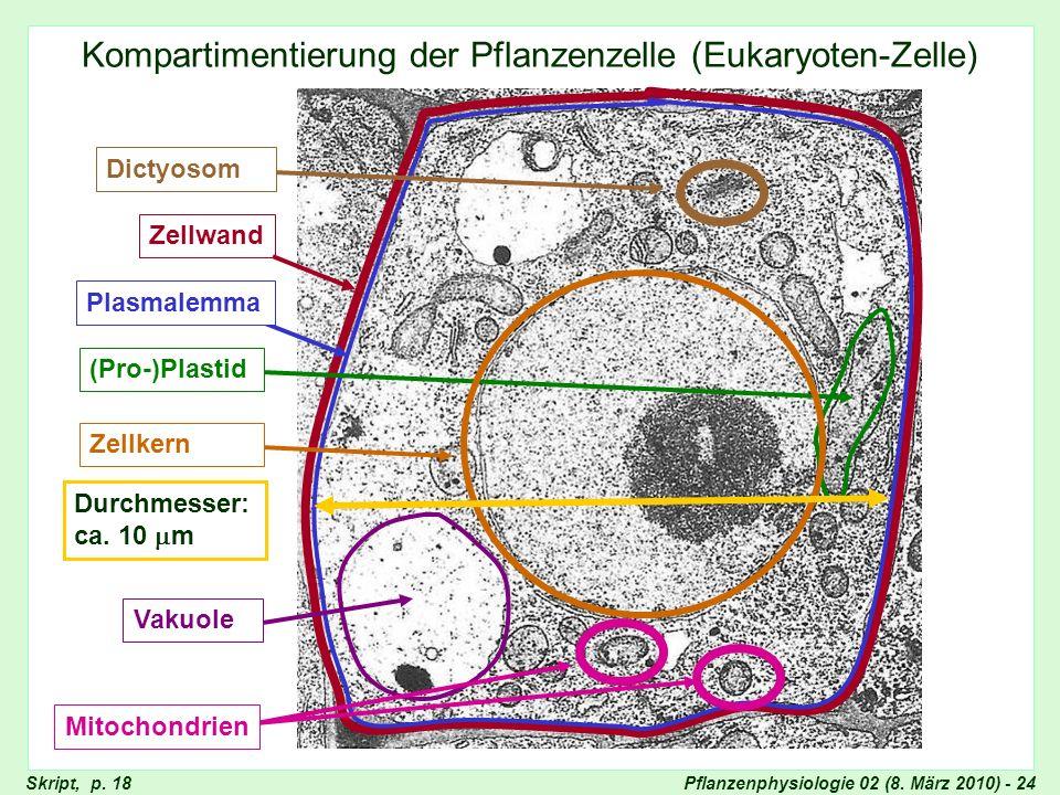 Pflanzenphysiologie 02 (8. März 2010) - 24 Kompartimentierung der Pflanzenzelle (Eukaryoten-Zelle) Unkompartimentierte Bakterienzelle Skript, p. 18 Ze