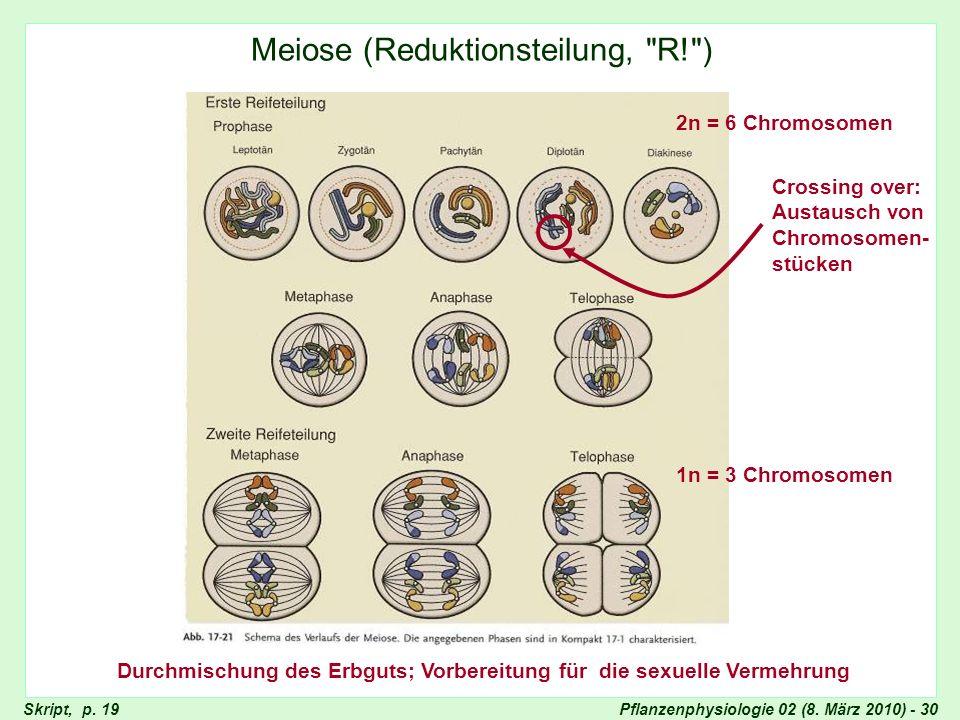 Pflanzenphysiologie 02 (8. März 2010) - 30 Meiose (Reduktionsteilung,
