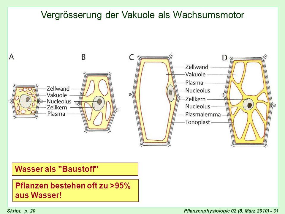 Pflanzenphysiologie 02 (8. März 2010) - 31 Vergrösserung der Vakuole als Wachsumsmotor Vergrösserung der Vakuole als Wachstumsmotor Wasser als