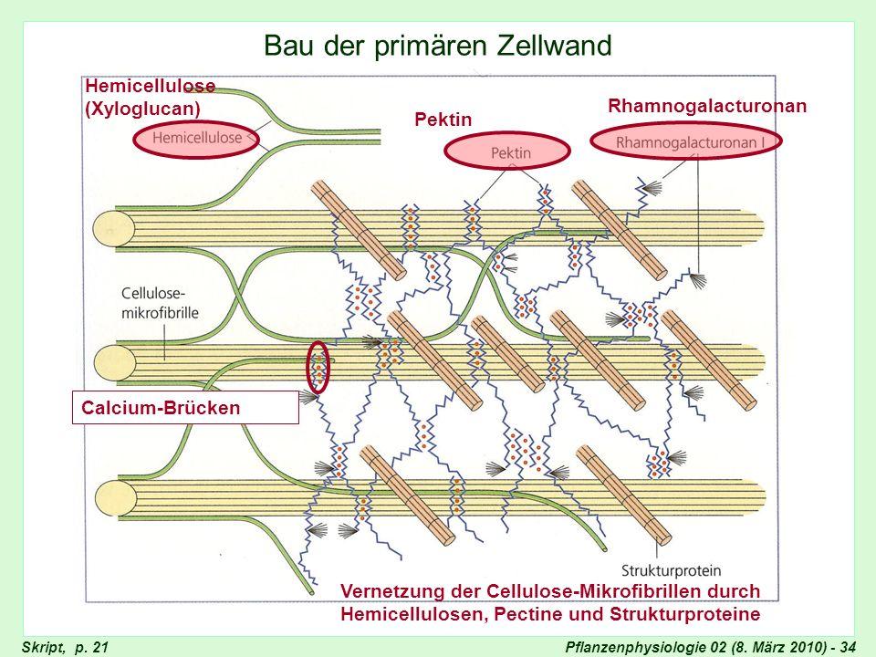 Pflanzenphysiologie 02 (8. März 2010) - 34 Bau der primären Zellwand Vernetzung der Cellulose-Mikrofibrillen durch Hemicellulosen, Pectine und Struktu