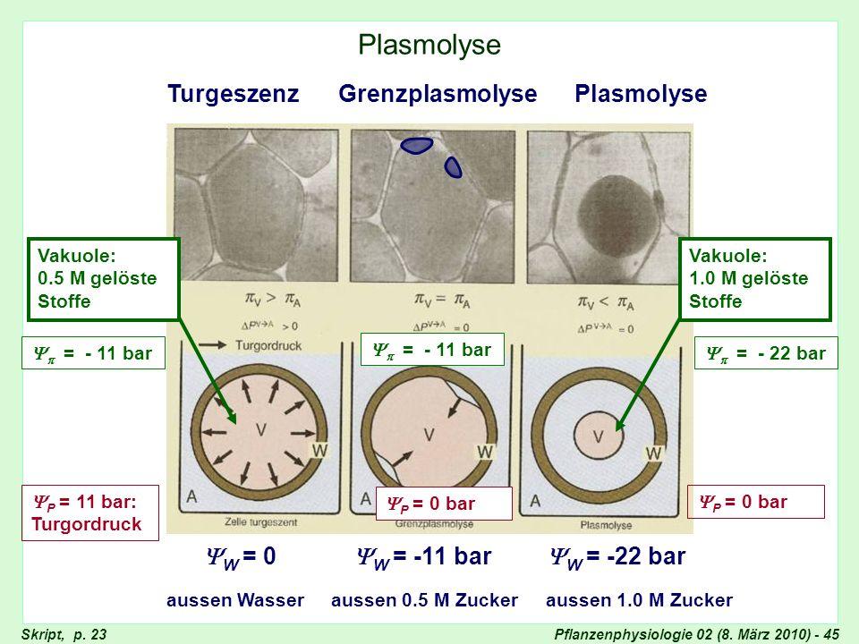 Pflanzenphysiologie 02 (8. März 2010) - 45 Plasmolyse Grenzplasmolyse aussen Wasseraussen 0.5 M Zucker Plasmolyse W = 0 P = 11 bar: Turgordruck = - 11