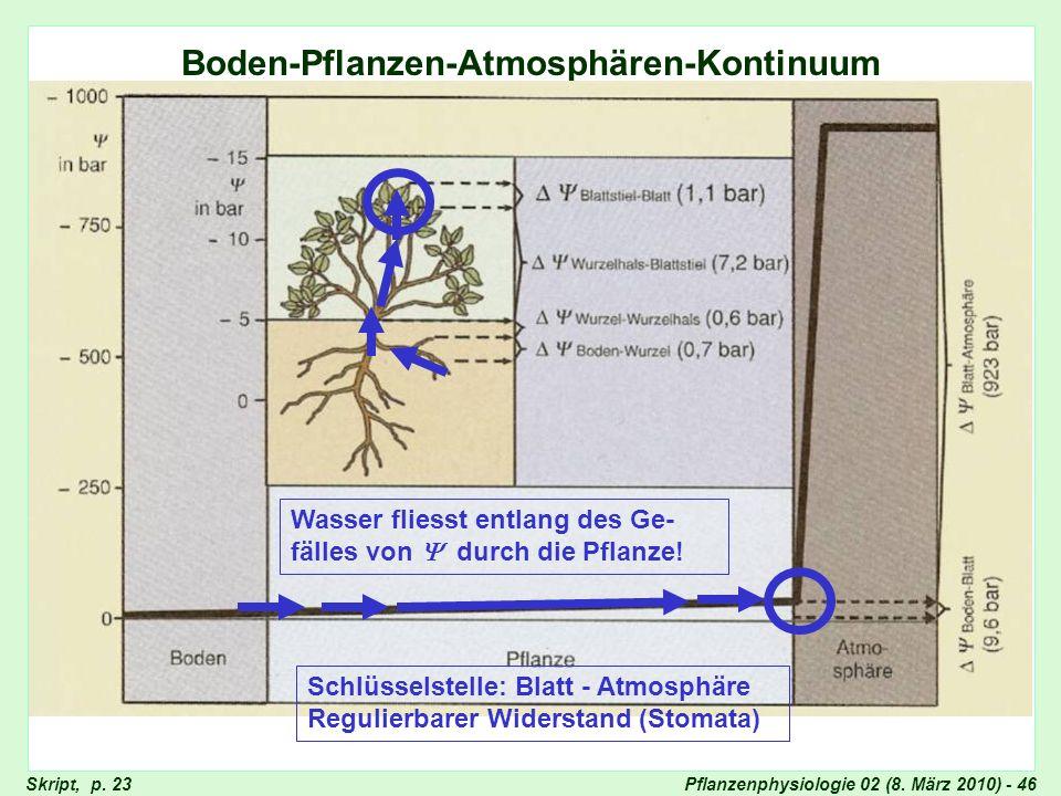 Pflanzenphysiologie 02 (8. März 2010) - 46 Boden-Pflanze-Atmosphäre Boden-Pflanzen-Atmosphären-Kontinuum Skript, p. 23 Wasser fliesst entlang des Ge-