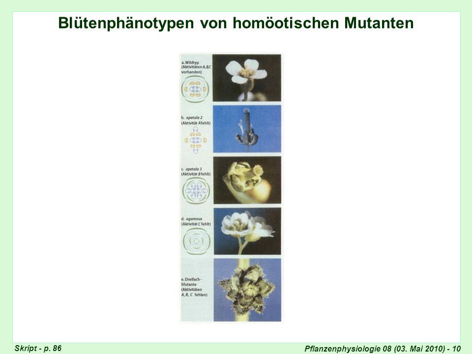 Pflanzenphysiologie 08 (03. Mai 2010) - 10 Blütenphänotypen von homöotischen Mutanten Skript - p. 86