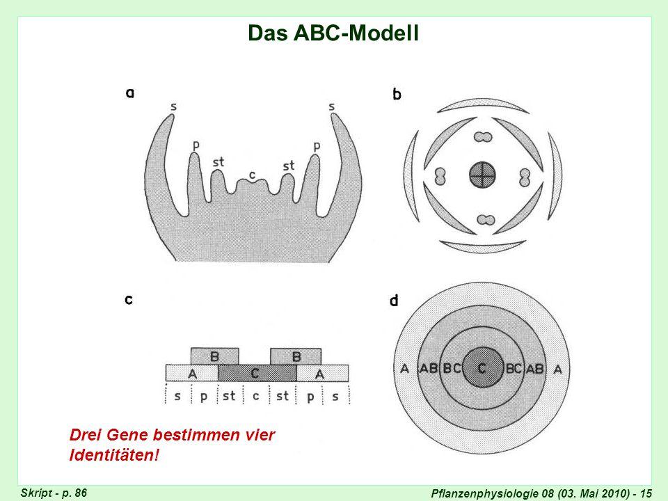 Pflanzenphysiologie 08 (03. Mai 2010) - 15 Das ABC-Modell Drei Gene bestimmen vier Identitäten! ABC-Modell Skript - p. 86