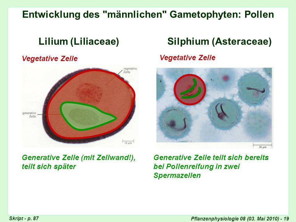 Pflanzenphysiologie 08 (03. Mai 2010) - 19 Entwicklung des